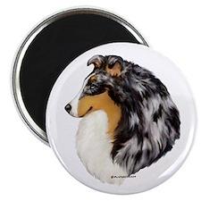 Blue Merle Shetland Sheepdog Magnet
