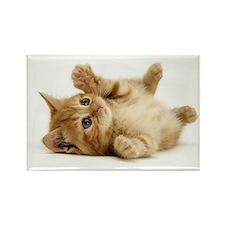 Orange kitten Rectangle Magnet