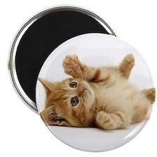 Orange kitten Magnet