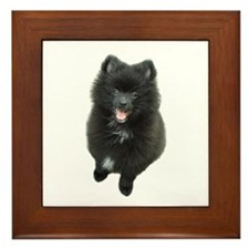 Adorable Black Pomeranian Puppy Dog Framed Tile