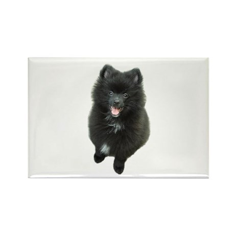 Adorable Black Pomeranian Puppy Dog Rectangle Magn