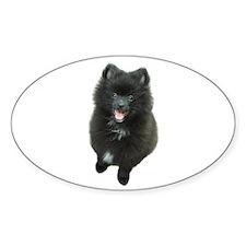Adorable Black Pomeranian Puppy Dog Decal
