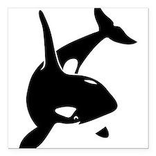 orca killer whale schwertwal wal scuba diving Squa