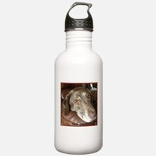 Chocolate Lab Face Sports Water Bottle