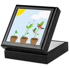 Seedlings Keepsake Box