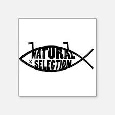 "Natural Selection Dead Fish Square Sticker 3"" x 3"""