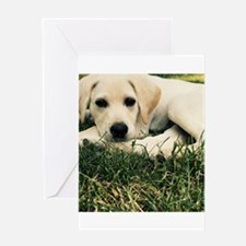 Cute Puppy Lab Greeting Cards