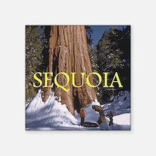 "ABH Sequoia Square Sticker 3"" x 3"""