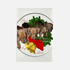 German Pinscher Rectangle Magnet (100 pack)