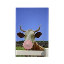 Intelligent Cow? Rectangle Magnet (10 pack)