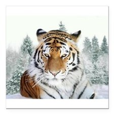 "Snow Tiger Square Car Magnet 3"" x 3"""