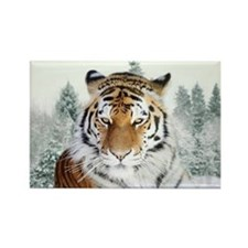 Snow Tiger Rectangle Magnet