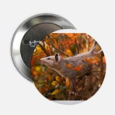 "Autumn Opossum 2.25"" Button"