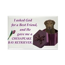Chesapeake Bay Retriever Rectangle Magnet