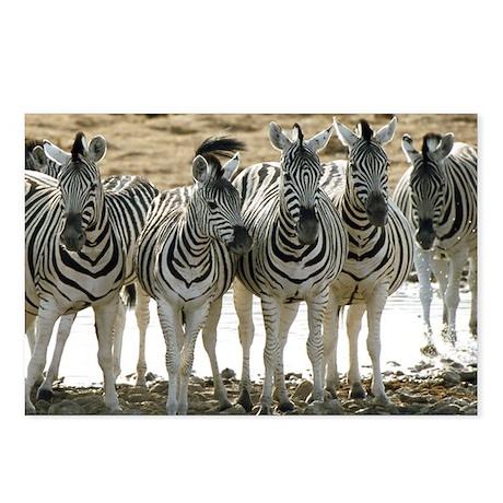 Zebra Line Postcards (Package of 8)