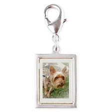 Silkie Terrier 3 Silver Portrait Charm