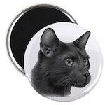 Havana Brown Cat Magnet