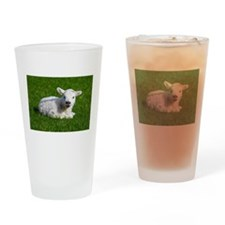 Baby lamb Drinking Glass