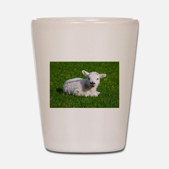 Baby lamb Shot Glass