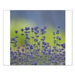 Lavender Flowers Small Poster