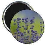 Lavender Flowers Magnet
