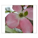 Pink Dogwood Flower Small Poster