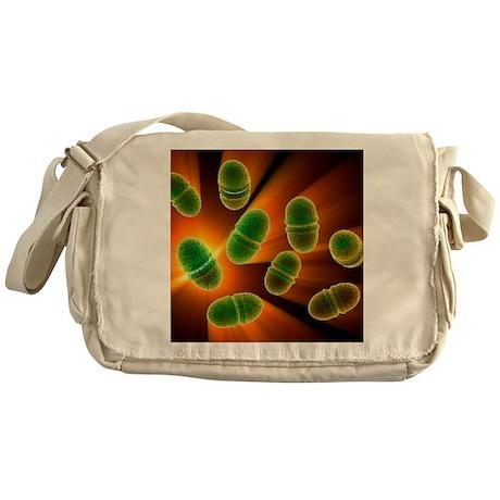Enterococcus faecalis, bacteria, artwork - Messeng