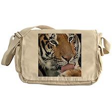 Tiger licking its paw - Messenger Bag