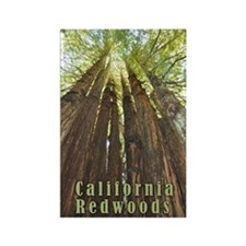California Redwoods Magnets