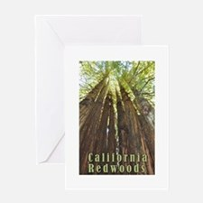 California Redwoods Greeting Cards