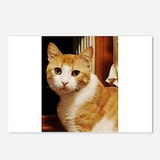 Orange Tabby Postcards (Package of 8)