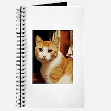 Orange Tabby Journal