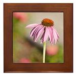 pink echinacea Framed Tile