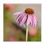 pink echinacea Tile Coaster