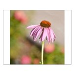 pink echinacea Posters