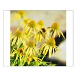 yellow echinacea flowers Posters