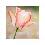 Peach Tulip Flower Small Poster