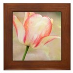 Peach Tulip Flower Framed Tile