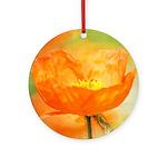 orange iceland poppy Ornament (Round)