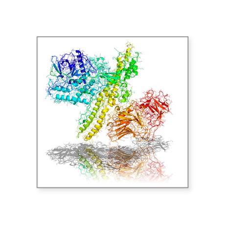 Botulinum toxin A, molecular model - Square Sticke