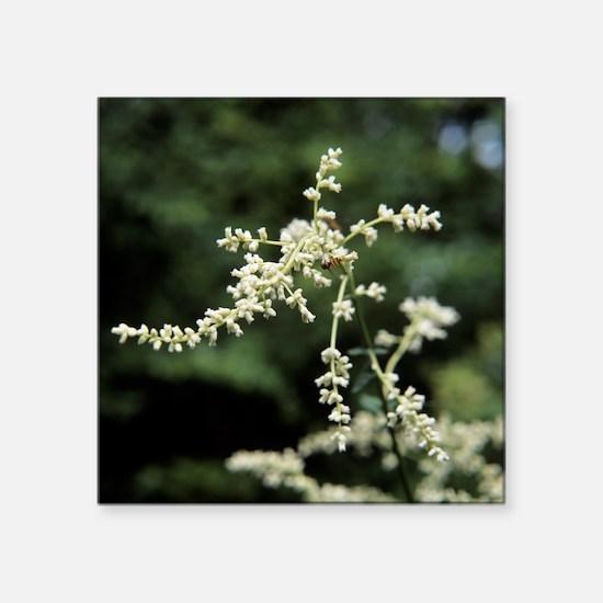 Artemisia flowers - Square Sticker 3