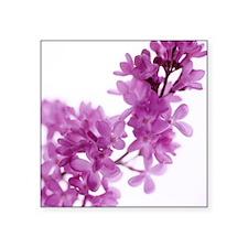 Lilac (Syringa vulgaris) - Square Sticker 3