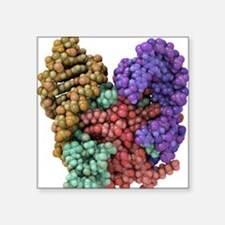 mRNA recognition by bacterial repressor - Square S