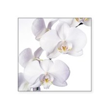 Orchid flowers - Square Sticker 3