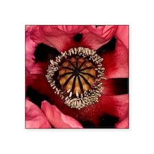 Poppy (Papaver sp.) - Square Sticker 3