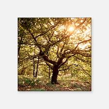 Tree in spring - Square Sticker 3
