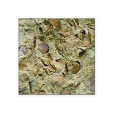 A mixed assemblage of fossils - Square Sticker 3