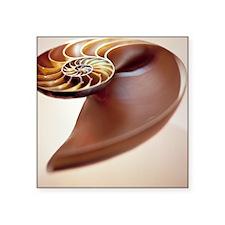 Nautilus shell - Square Sticker 3