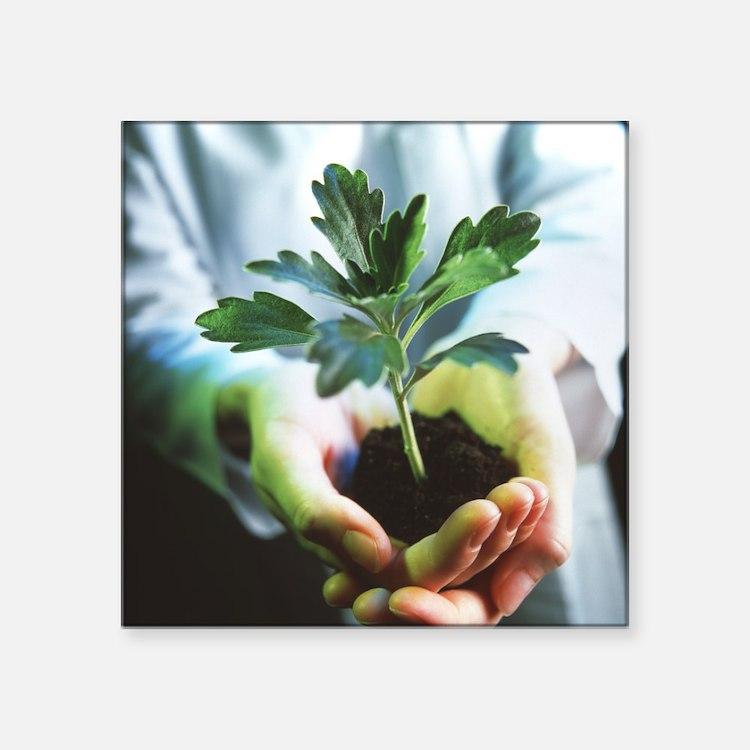Genetically modified plant - Square Sticker 3