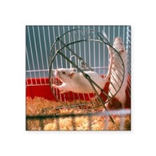 Laboratory gerbils - Square Sticker 3